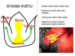 obrázek 2 (6)